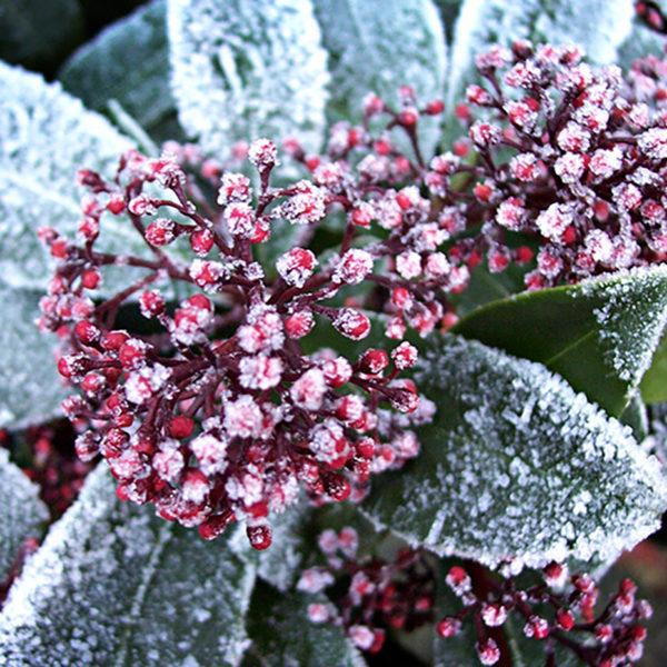 Frost im Garten