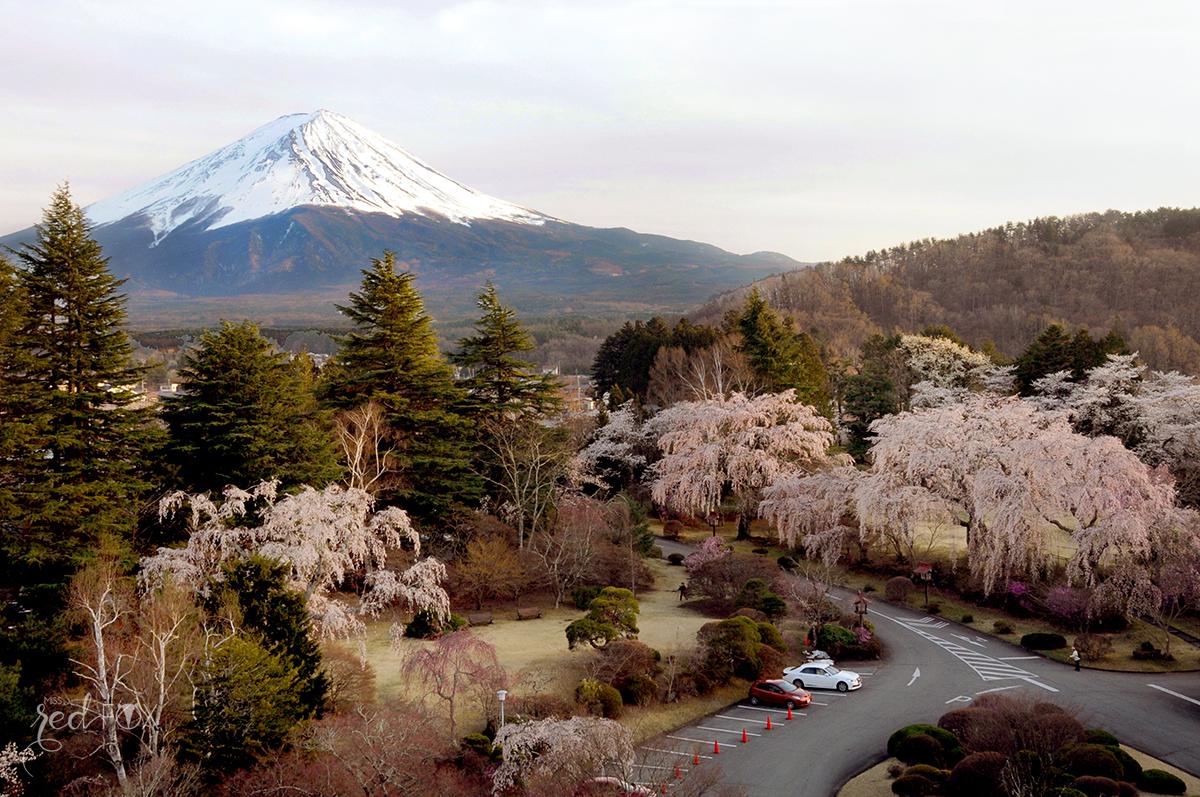 missredfox - Japan - Fuji - 20