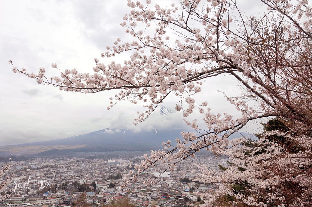 missredfox - Japan - Fuji - 29