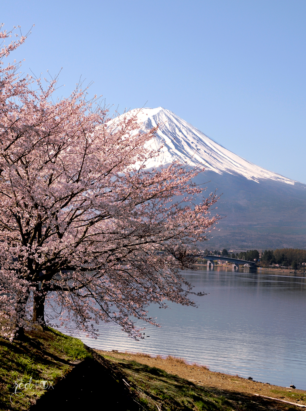 missredfox - Japan - Fuji - 46