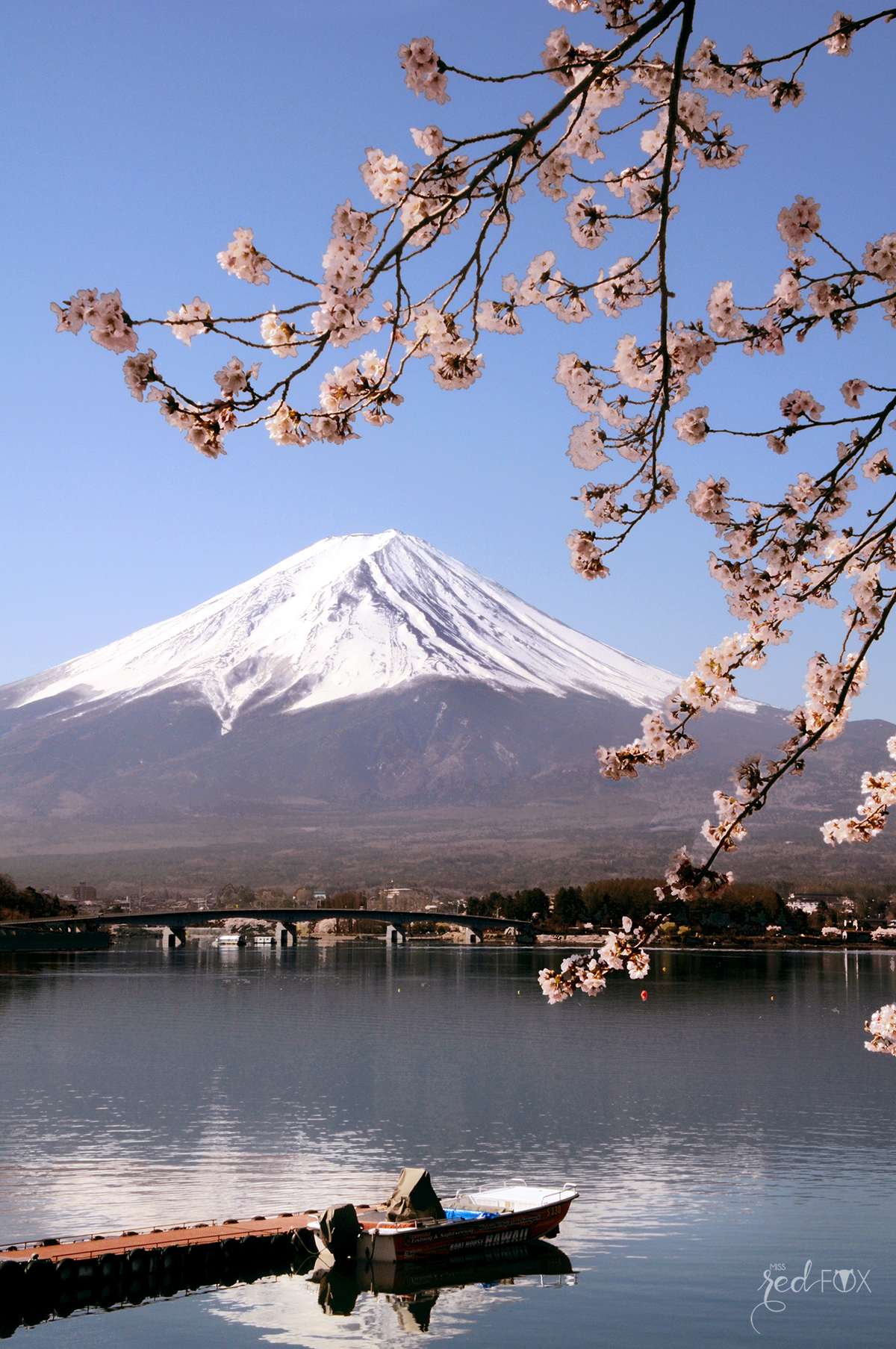 missredfox - Japan - Fuji - 47