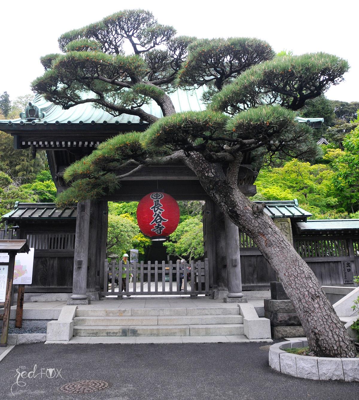 missredfox - Japan - Kamakura - 09