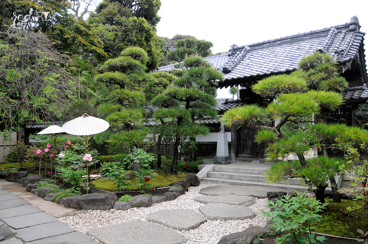 missredfox - Japan - Kamakura - 26
