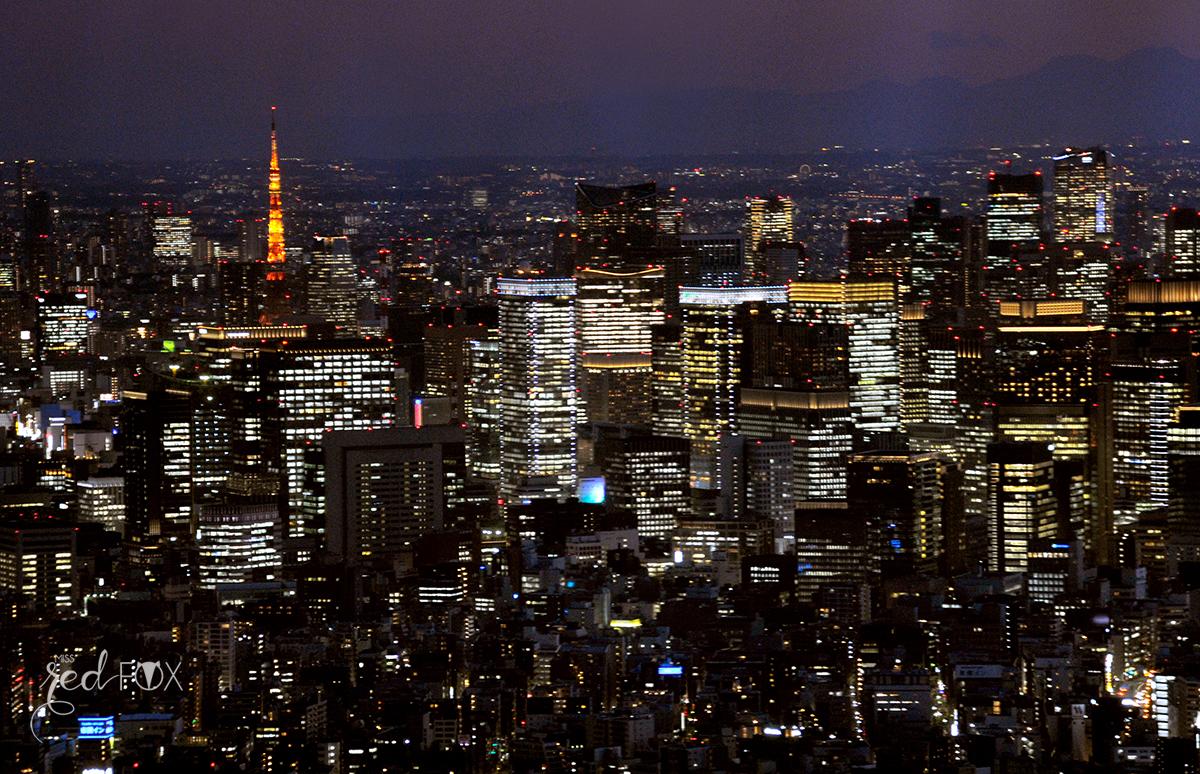 missredfox - Japan - Tokyo - 40